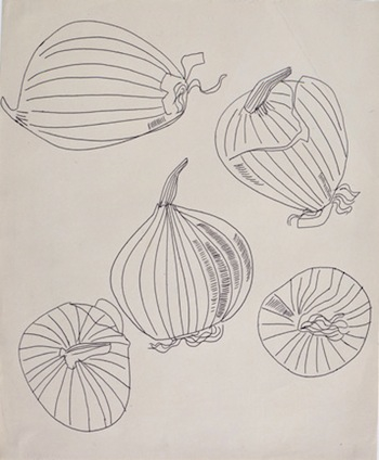 "Andy Warhol, ""Five Views of an Onion"", 1950s. Ballpoint on Manila paper, 16 3/4 x 13 7/8 in. The Andy Warhol Museum, Pittsburgh Founding Collection, Contribution The Andy Warhol Foundation for the Visual Arts, Inc."
