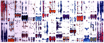 """Paternity Test"", Chromogenic prints of DNA analysis, 2000, courtesy High Museum"