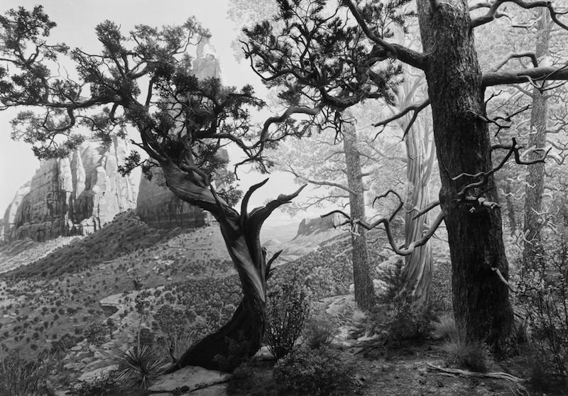 sugimoto_juniper_forest copy